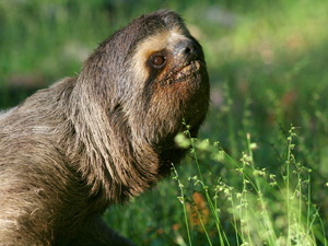 1147161_70362873_sloth_stock_xchng_royalty_free_300