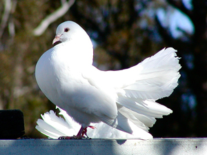338158_6008_arrogant_bird_stock_xchng_royalty_free_300