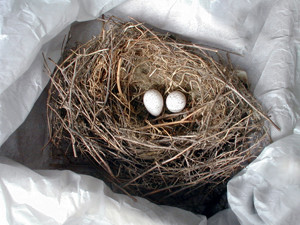 nest-1569454_free_images_royalty_free_300