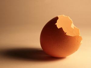 1153431_64677119_broken_egg_stock_xchng_royalty_free_300